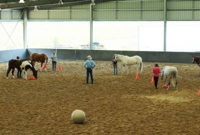 Horsemanship-Clinics-Courses-BLS Horsemanship's-Equestrian-events