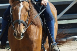 Fun-Horse-Training-BLS-Horsemanship-Horse-Behaviour-Training