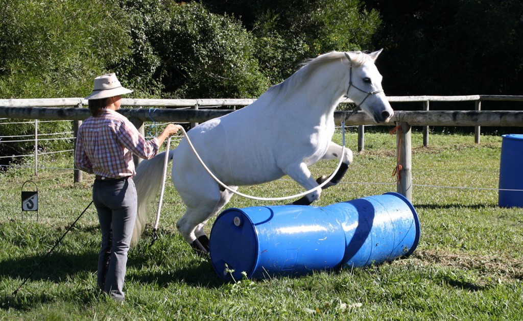 Mastering Body Awareness with Horses
