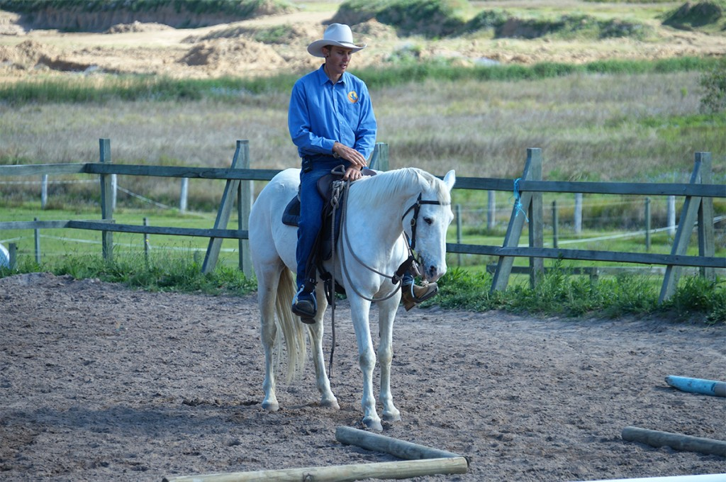 Horse-Training-breaking-Foal-and-Young-horse-handling-re-education-Online-Academy-Training-videos