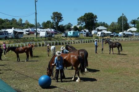 beginner-rider-Horsemanship-clinic