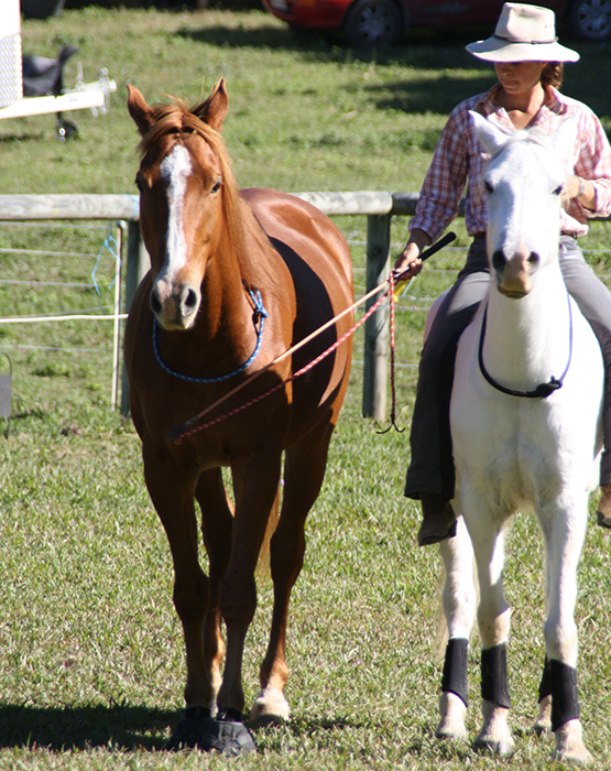 The importance of taking your Horsemanship to the next level