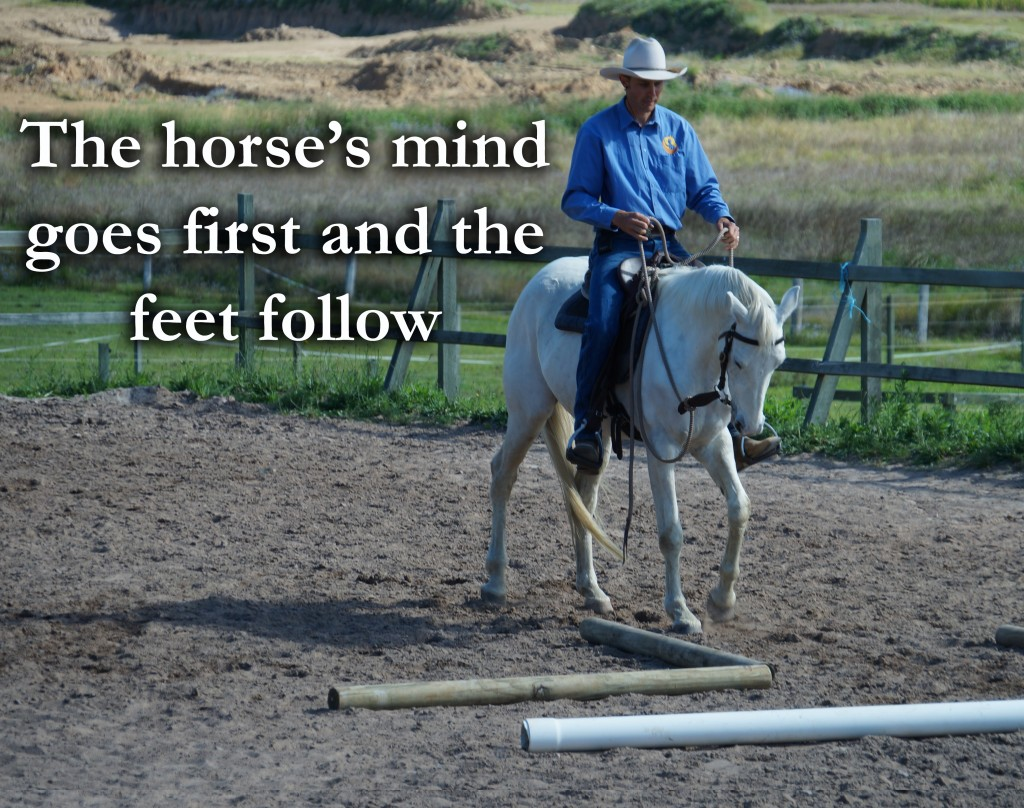 Quote – The horse's mind goes first & the …