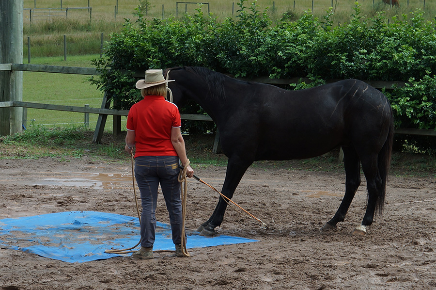 Managing your horse's Anxiety and Fear