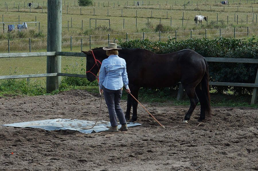helping-overcome-horse-fear-anxiety