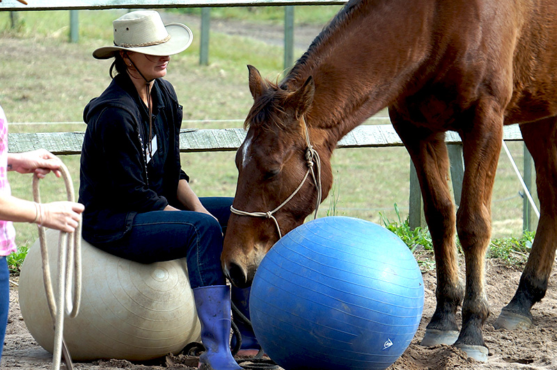 The Purpose of Desensitisation in Horse Training Part 2
