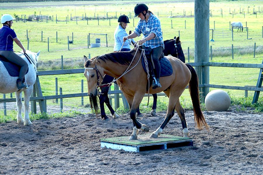 The Purpose of Desensitisation in Horse Training Part 1