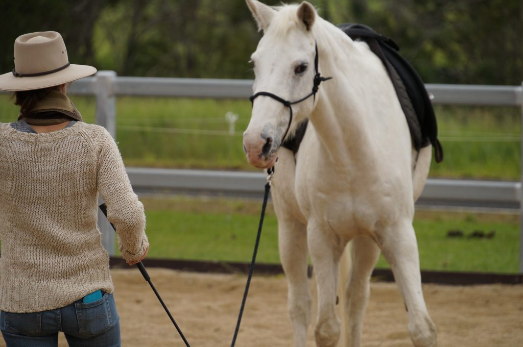 Keeping your horse training balanced