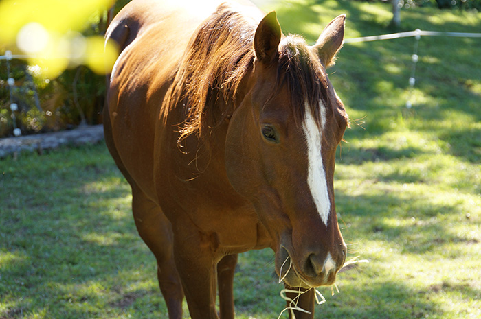 My Journey to Equine Connection