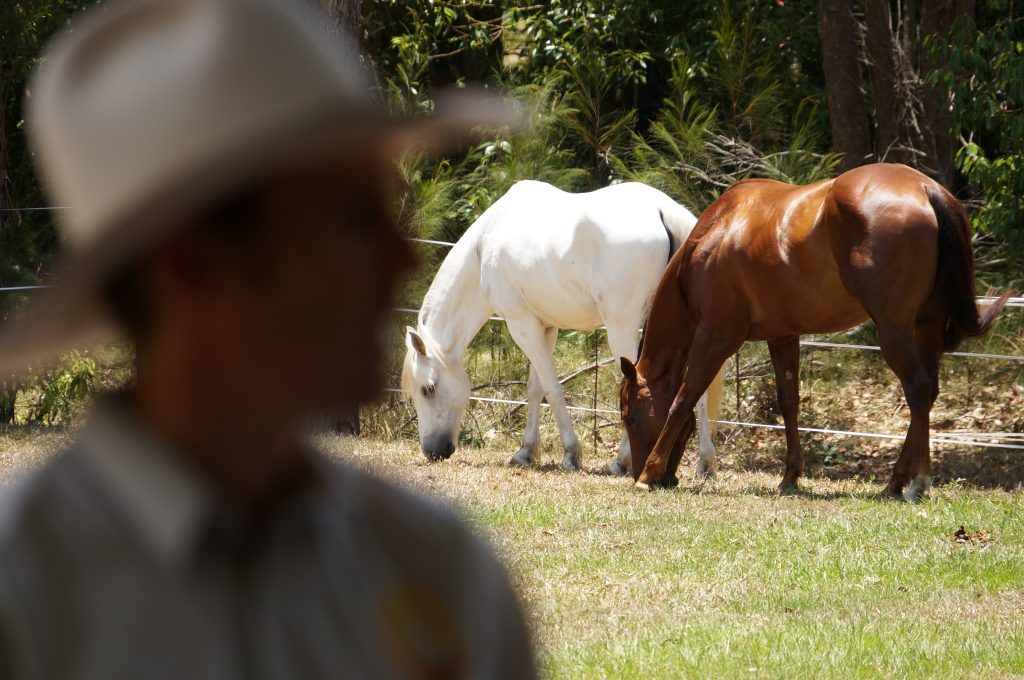 horse-training-tips-blog