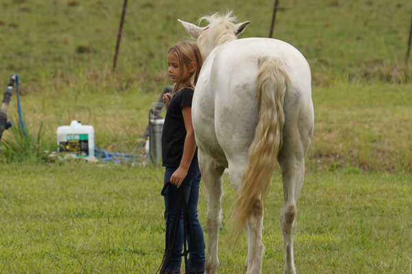 Top 5 strategies for managing your emotions when training your horse